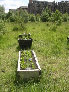 Vegetables growing on the Meadow